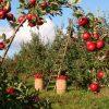 農業法人の実家がMEDS CLN(メッズクラン)のファクタリングを利用した体験談